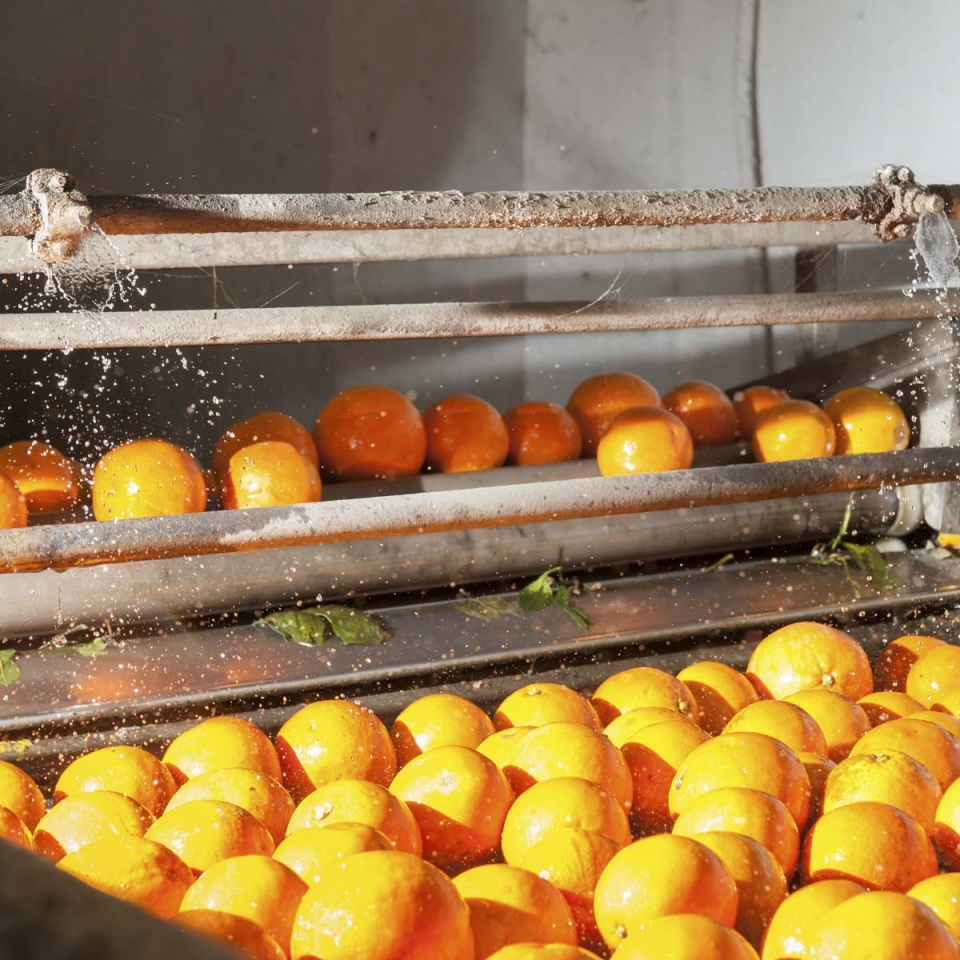 Frunexa fruit handling and packaging industry