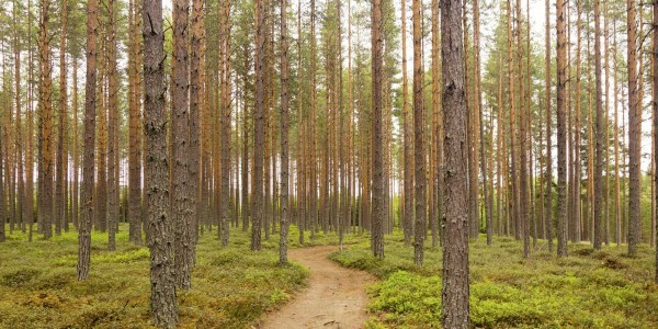 Technology for forest management